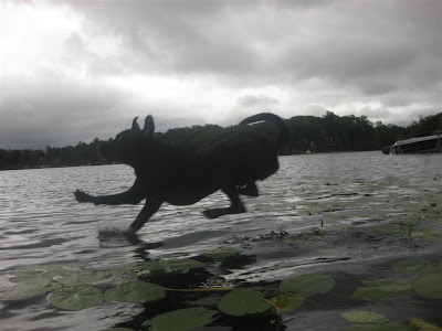 dog jumping off dock into the lake