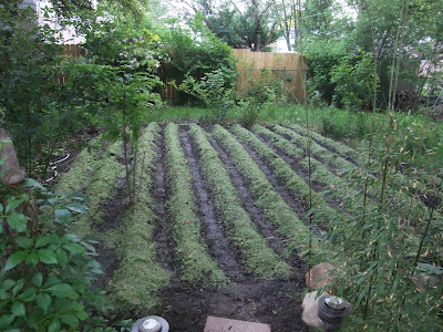 till and fertilize rows in garden
