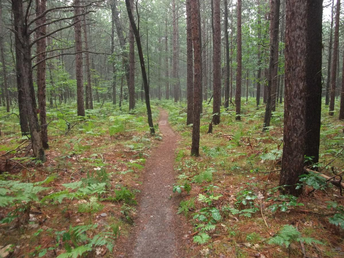 hiking trail in the manistee forest, a walk in the woods, michigan trail hiking