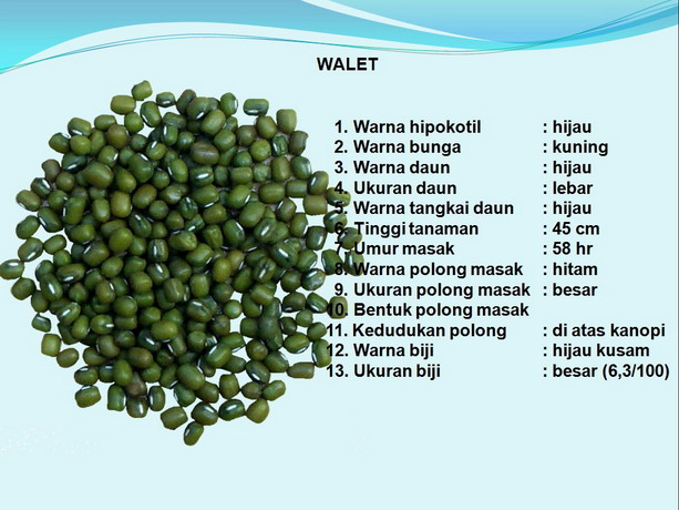 kacang hijau menurut wikipedia 2 seribu manfaat kacang hijau