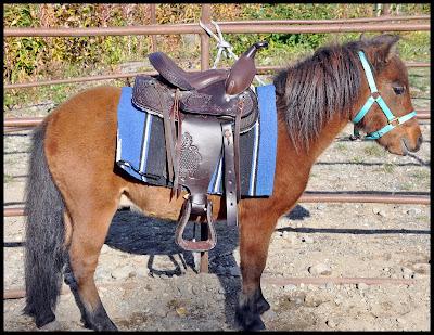 miniature horse  saddle