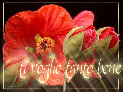 http://1.bp.blogspot.com/_XJpefzgJrLU/TB_0DrfdkkI/AAAAAAAABME/nSK0RRlp0FM/s1600/i+love+you+flowers_coquelicot.jpg