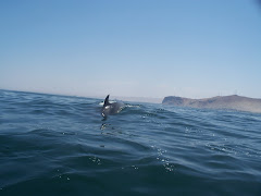 Delfines y Chinchorro Expediciones
