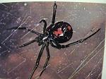 23. spider bites