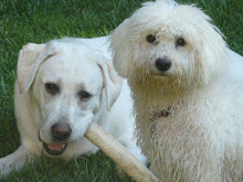 Max and Korbie
