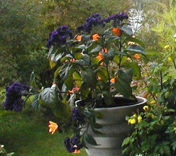 Min veranda 2008