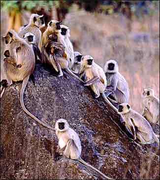 wildlife heritage of india India has a rich heritage of wildlife as well as a long history and tradition of  conservation the conservation ethic was imbibed in the sylvan surroundings of  the.