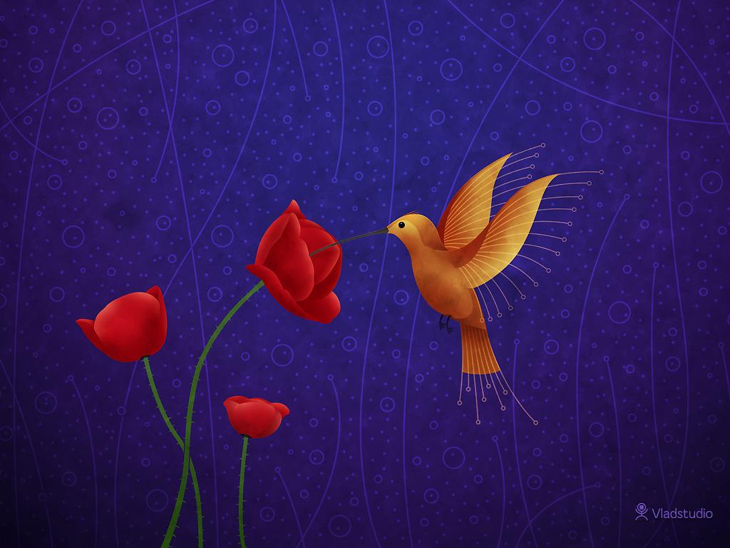 http://1.bp.blogspot.com/_XOFunVJ_X_s/TOCv1Mn6LfI/AAAAAAAAAUA/rZl8Y5DBZaY/s1600/vladstudio_hummingbird_1024x768.jpg
