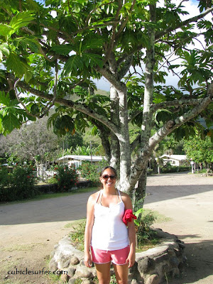 Uru, breadfruit tree, Moorea