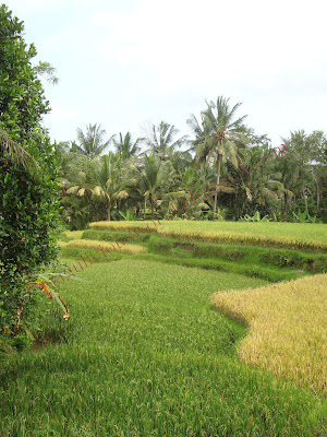 Edang suggested we make a little detour just before ubud to walk a