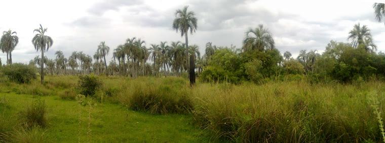 SALVEMOS EL PALMAR BUTIA