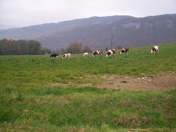 L'AGRICULTURE ENCORE BIEN PRESENTE A SEYNOD