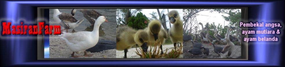 masiranfarm - Goose, Guinea Fowl & Turkey