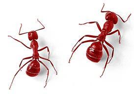 myrarter i sverige