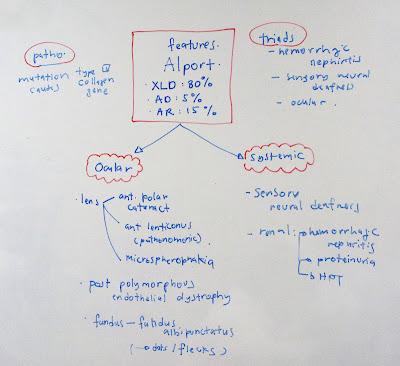 classifications essays