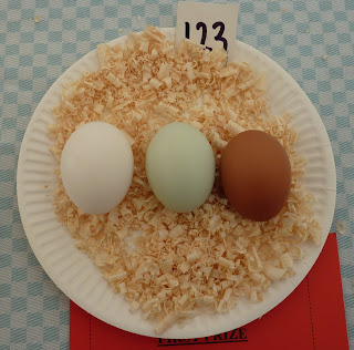 Clever chicken - prizewinning eggs