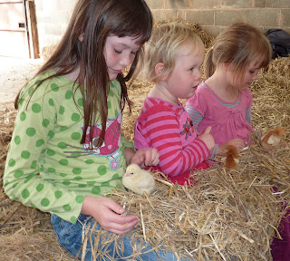 Chick handling - Holly, Meg and Rosie