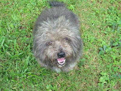Mariel's_Castle_Dog_Supie@http://marielscastle.blogspot.com