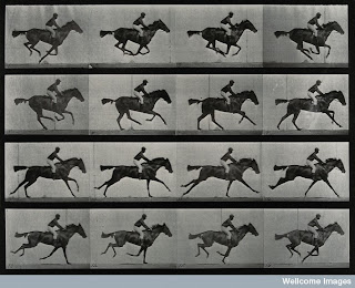 Muybridge sequence of galloping horse