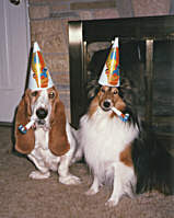 basset and collie