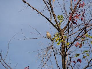 mocker in tree