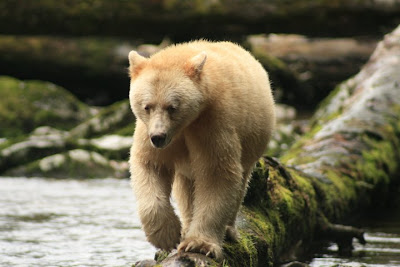 StandUp4GreatBear Expedition