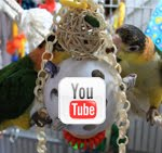 Visit Our Precious Parrots