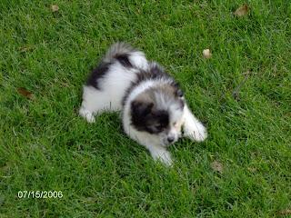 Puppy Friday V