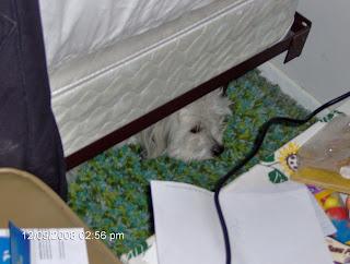 Nisie Under the Bed