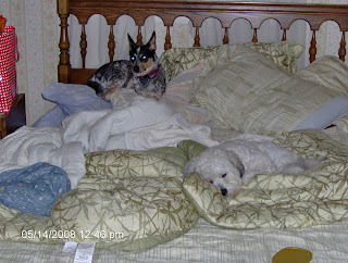 Nisie Sleeping on the Guest Bed