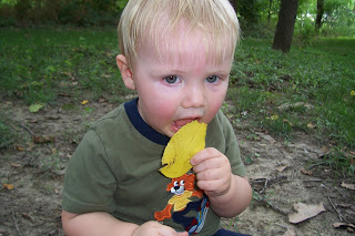 toddler eating a yellow leaf