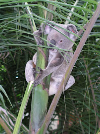Koala?? Palm Tree??