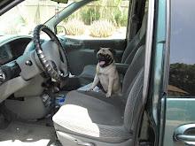 Yoda thinks she can drive