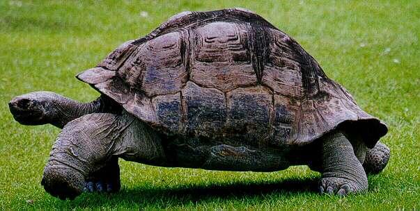 Tortugas, véalas en movimiento haciendo clic sobre la imagen