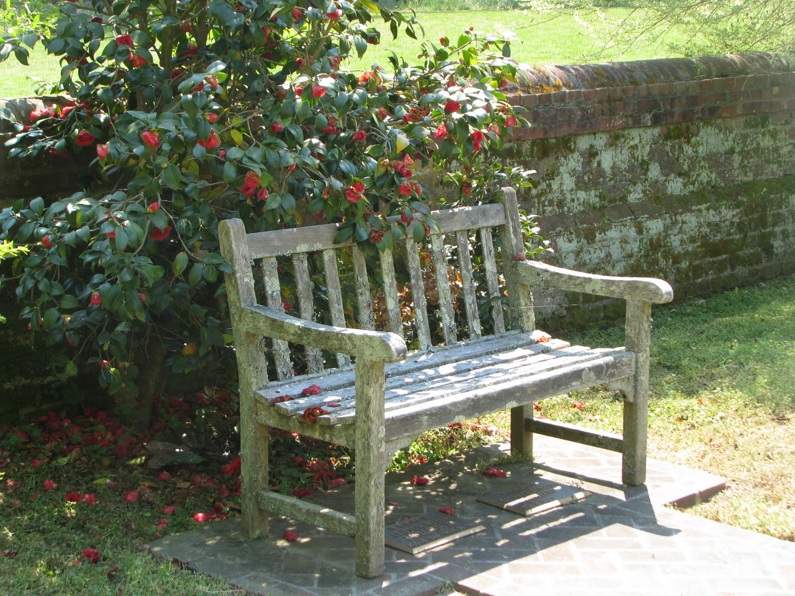 life in mathews  here we have a photo from historic abingdon episcopal church of a lovely bench nestled in some very lovely flowers in a patch of very nice sunlight