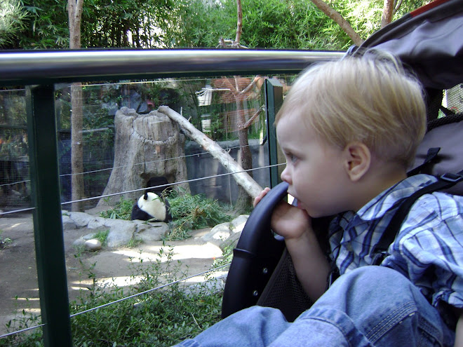 Gavin Loved the Pandas