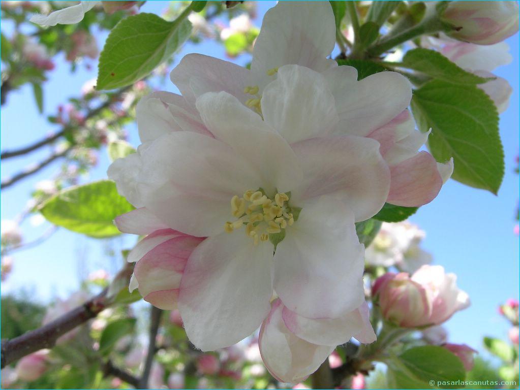 Imagenes de flores exoticas miles para facebook picture to - Flores tropicales fotos ...