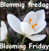 Blommig fredag