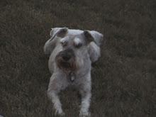 Dawn's dog Silver