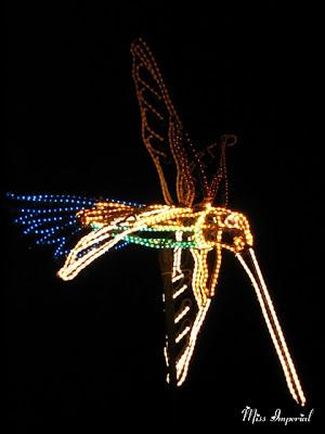 Hummingbird in the Botanic Garden, Albuquerque, NM, 26-Dec-06