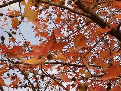 モリコロパークの紅葉