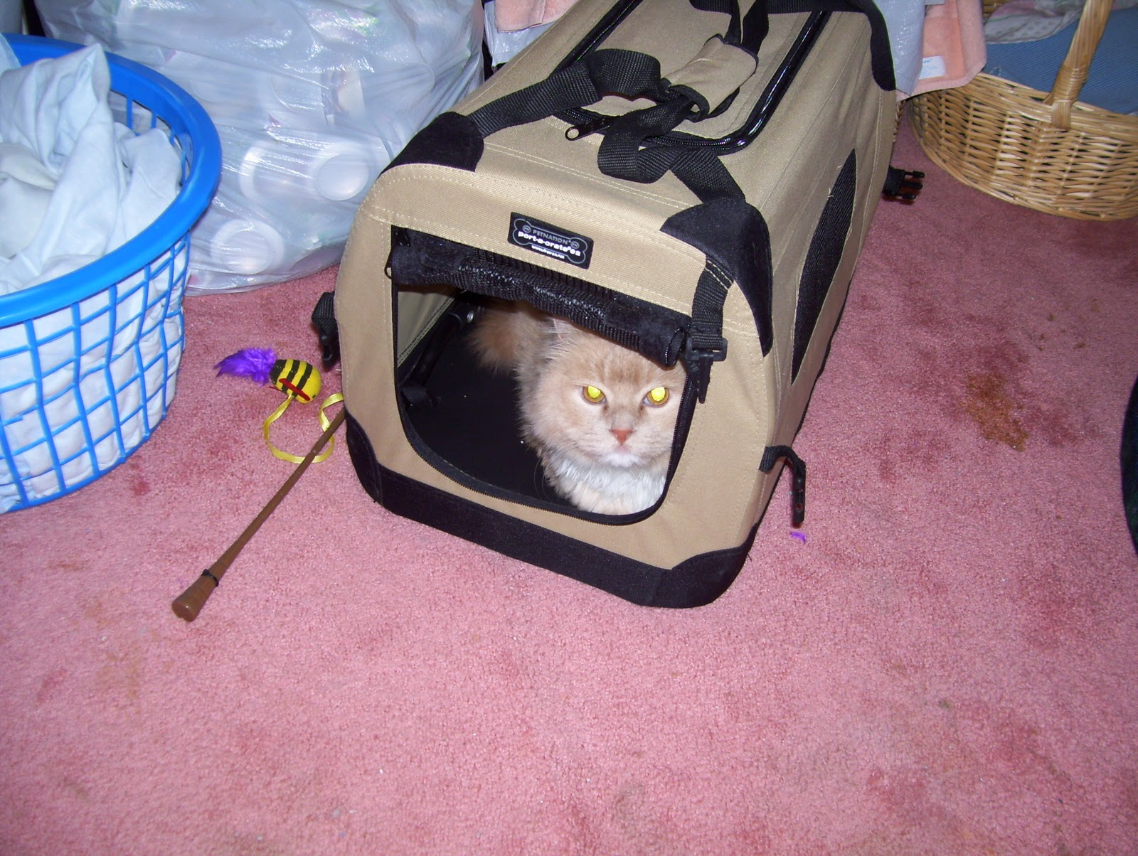 Soft Pet Carrier For Cats