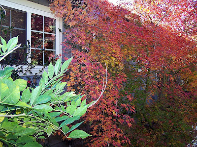 I love my Japanese maple tree