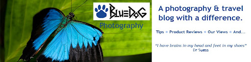 Bluedog Photography