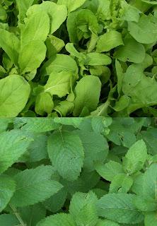 herbs (onemorehandbag)