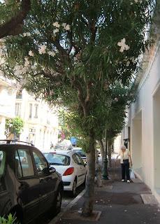 oleander (onemorehandbag)