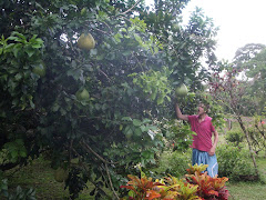 Tom with Pomelo Tree