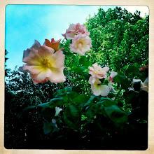 I heart flowers