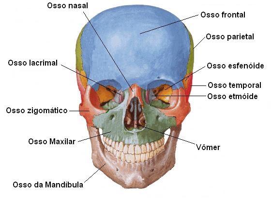 Pequenas protuberâncias brancas em uma cabeça do membro