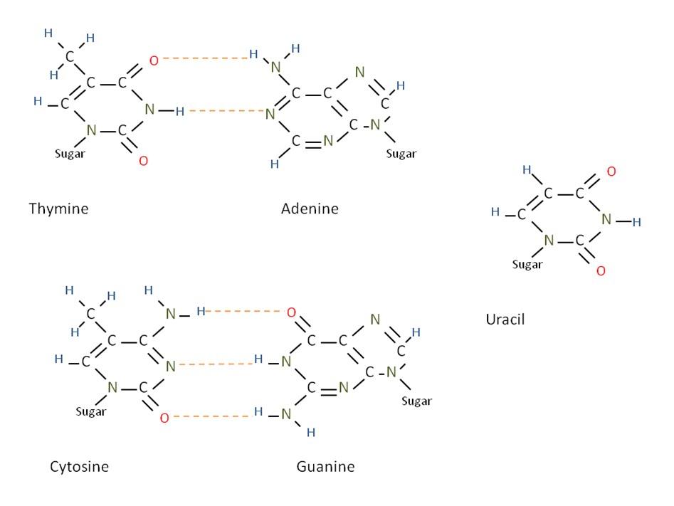 chic plan232te a few stuff about molecular biology